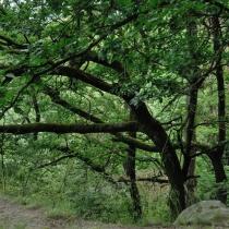 Panská skála (Horní Požáry)