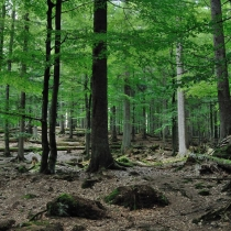 Tierpark Bayerischer Wald