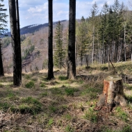 beskydy-godula-ropicka-ropice_10