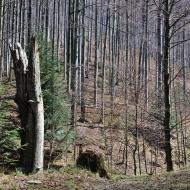 Beskydy - Cestou na Tanečnici