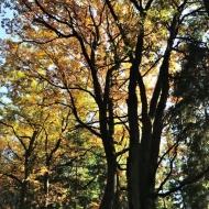 brdy-podzim_01