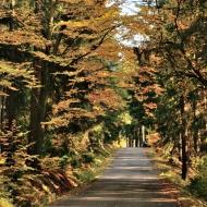 brdy-podzim_02