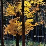 brdy-podzim_03