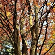 brdy-podzim_04