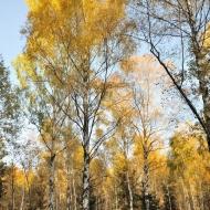 brdy-podzim_11