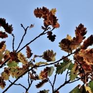 brdy-valdek-podzim_10