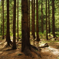 Les u Dráteniček