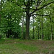hrebeny-oppidum-hradec_06