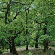 hrebeny-oppidum-hradec_08