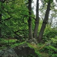 hrebeny-oppidum-hradec_09
