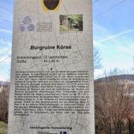 burg-korse_20