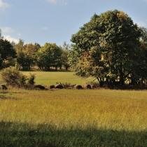 Krkonoše - Rýchory -Cestou na Dvorský les
