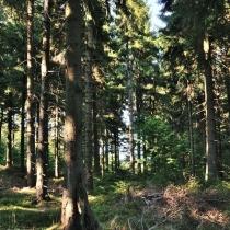 Cestou na Dvorský les