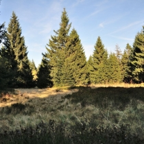 Rýchorský prales