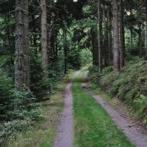 Dvorský les