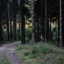 Krkonoše - Rýchory -Dvorský les
