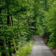 Cestou z Litic
