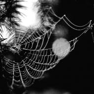 Pavučina (černobílá)