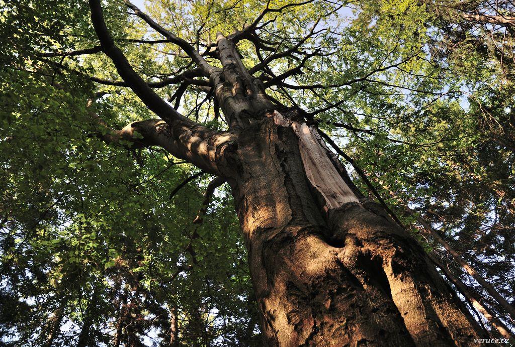 Trniště a Harcovský les