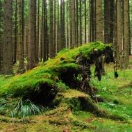 Žďárské vrchy - Ze Svratky na Zkamenělý Zámek