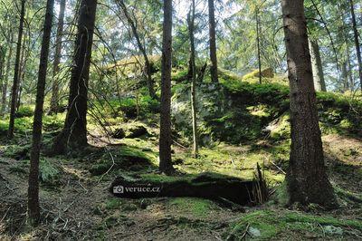 Vyhlídka Liebeshöhe - Hojsova Stráž